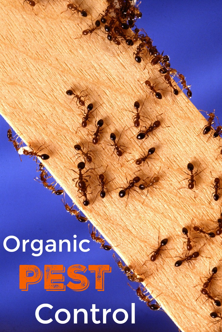 Get these tips for organic pest control this summer.