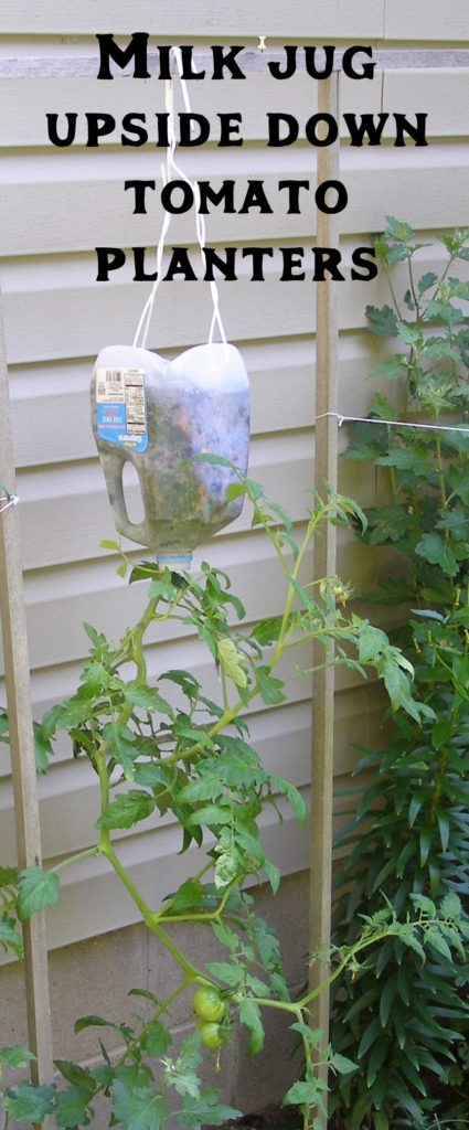 Milk Jug Upside down Tomato Planter from Dream Garden 101