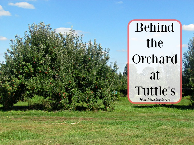 Behind the Orchard at Tuttle Orchards + a Tuttle's Giveaway