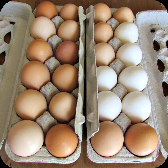 Farm Fresh Eggs {Wordless Wednesday}