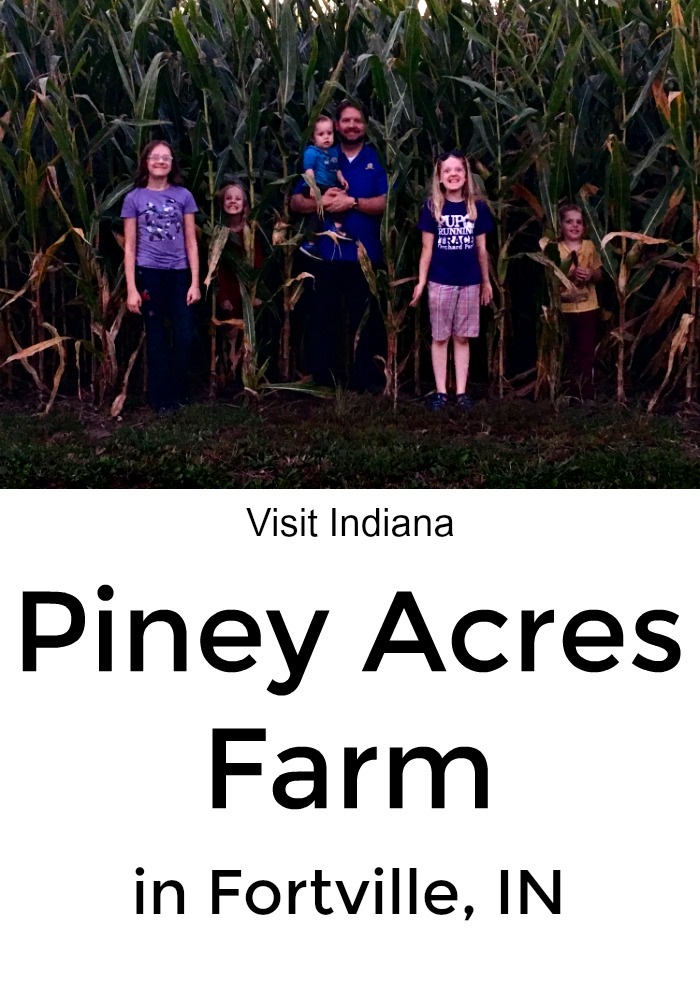 Take a trip to Piney Acres Farm in Fortville, Indiana. Run through the corn maze, and pick up your christmas tree.