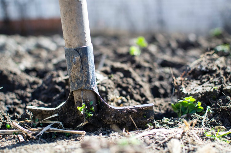 What should you compost?